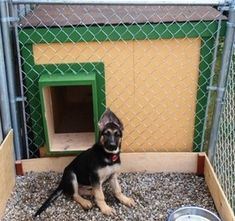 Nala - Ontario, Canada:  several years of being tried and tested, this dog house has been proven to be the most comfortable and the safest home you can build for your beloved dog.