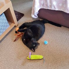 Yesterday I adopted a blind cat! Meet Inky! by __Smaug__ cats kitten catsonweb cute adorable funny sleepy animals nature kitty cutie ca