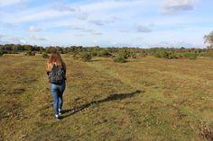 AUTUMN FOREST WALK