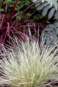 Here's an easy-care garden pair with interesting color and texture -- Clarity Blue dianella and Platinum Beaty lomandra. Learn about these and other complementary plants here. Dry Garden, Garden Art, Garden Plants, Garden Design, Container Plants, Container Gardening, Drought Tolerant Shrubs, Lomandra, California Garden