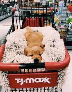 puppies sleeping through the night . puppies sleeping together . puppies sleeping in bed . Cute Baby Dogs, Super Cute Puppies, Cute Little Puppies, Cute Dogs And Puppies, Cute Little Animals, Cute Funny Animals, Funny Dogs, Doggies, Funny Humor