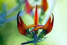 20-Rares-Flowers.6.jpg (700×467)