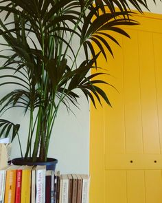 A&T house, yellow door, kentia palm, book corner, temporary bookcase