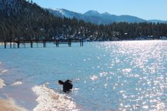 Lake Tahoe || via Seek + Scout, a lifestyle and travel blog for you and your dog || seekandscout.net