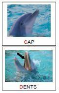 Els dofins (vocabulari 1a part)
