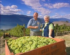 Welcome to Gray Monk - the Okanagan's oldest family owned and operated winery, located in Lake Country, BC. Vernon Bc, Tourism, Canada, Wineries, Travel, Gray, Turismo, Wine Cellars, Viajes