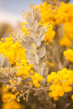 Flowers yellow flora New Ideas