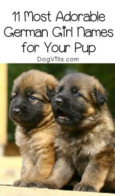 Dog Stuff Organize Need a name for your new hund? Check out 11 of the most adorable German girl dog names for your sweet welpe!Dog Stuff Organize Need a name for your new hund? Check out 11 of the most adorable German girl dog names for your sweet welpe! Pet Names For Dogs, Puppies Names Female, Female Dog Names, Puppy Girl Names, Cute Puppy Names, Cute Names, Cutest Dog Names, Funny Girl Dog Names, Baby Names