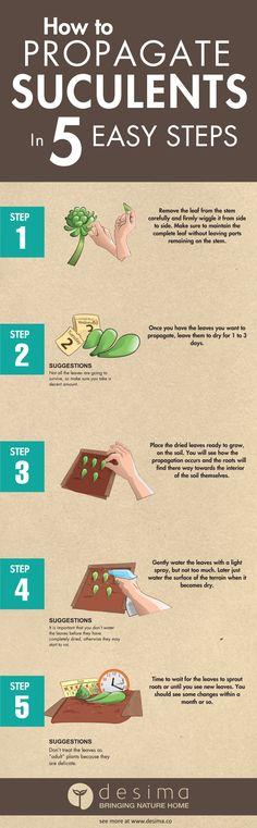 Максимально просто!  1. Аккуратно отделите несколько листьев в  нижней части растения.  2. Дайте листьям подсохнуть от 1 до 3–х дней.  3. Просто положите листья в ёмкость с землёй (закапывать не нужно).  4. Опрыскивайте листья по мере высыхания почвы.