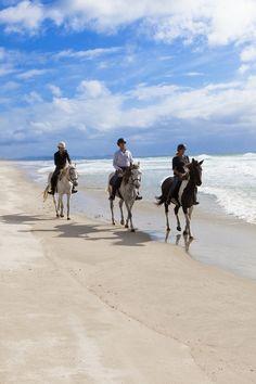 Seuls au monde sur les plages en Nouvelle-Zélande... avec les chevaux ! #voyage #chevaldaventure