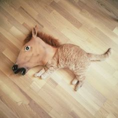 Creepy Horse Mask is an Internet culture sensation that sounds exactly like it is: a creepy horse mask used in a variety of, usually hilarious, scenarios. 10 Awesomest Photos of Pets Wearing A Creepy Horse Mask Cute Cats, Funny Cats, Funny Animals, Cute Animals, Silly Cats, Funny Humor, Horse Hay, Horses, Crazy Cat Lady