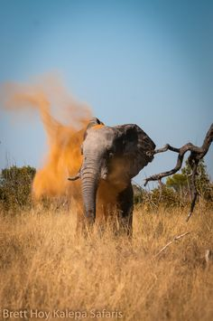 Red Dust - On a recent trip to Hwange National Park #elephant