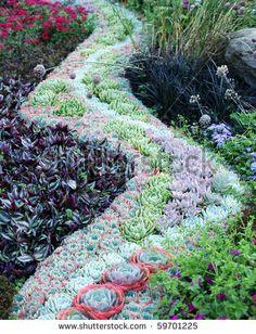 Succulent plants curving through a garden