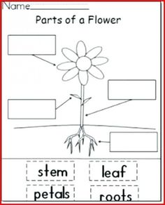Free Plant Life Cycle Mini Book for Kindergarten and spring. This mini-book is the simple version of my Bean Plant Life Cycle series. Plant Lessons, Science Lessons, Science Lesson Plans, Parts Of A Flower, Parts Of A Plant, Kindergarten Lesson Plans, Kindergarten Activities, Pre K Lesson Plans, Kindergarten Freebies