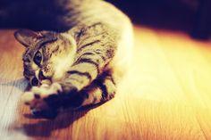 Snapcat- new ap for cat selfies. HA!