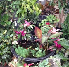 Summer Tropical display in our Greenhouse. Tropical, Display, Garden, Plants, Summer, Floor Space, Garten, Summer Time, Billboard