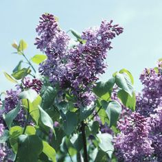 Late Spring: Prune Spring-Blooming Shrubs, Spring Gardening Guide
