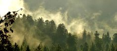 So dramatisch können die Nebelfetzten nach einem Sommergewitter über den Wald ziehen. Einfach faszinierend. Hotel am Sophienpark, Stadtmitte Baden-Baden und doch so nah an der Natur. http://www.hotel-am-sophienpark.de/