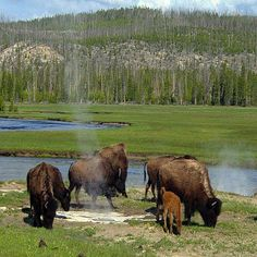 Hot Spring In   #yellowstone