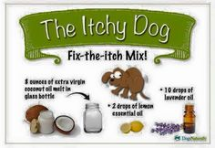 Relief for the Itchy Dog