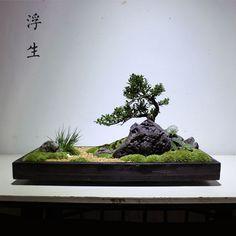 Bonsai Tree Care, Indoor Bonsai Tree, Bonsai Art, Jardin Zen Miniature, Miniature Plants, Garden Terrarium, Bonsai Garden, Moss Plant, Mini Zen Garden