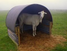 Goat shelter...I would put runners on it so it's mobile #BabyGoatFarm