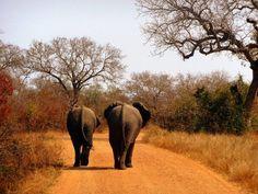 Kruger Park @ South Africa