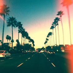 seriously miss driving down the street surrounded by palm trees :( home sick