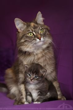 Mouni and the momma by thrumyeye.deviantart.com on @deviantART
