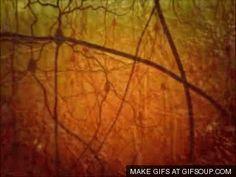 Neuron Gif Neurons