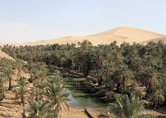 Sandy desert lies beyond an oasis in the Algerian Sahara.   Credit: © Spectrum Colour Library/Heritage-Images