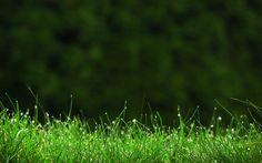 grass image for desktops - grass category