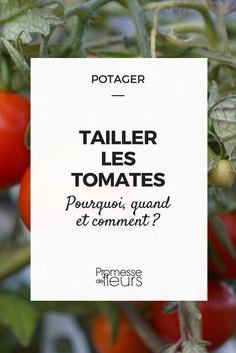 taille des tomates : pourquoi, quand et comment ? Quelles méthode adopter ? Suivez nos conseils ! #potager #tomate #taille