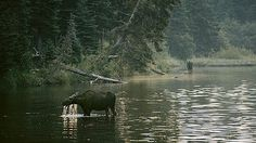 Isle Royale National Park, Michigan: Quietest and Darkest National Parks