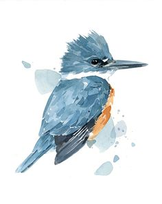 Belted Kingfisher Watercolor, bird art print | david scheirer watercolors