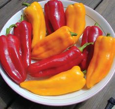 Corno di Toro Pepper (Red or Yellow, Carmen Italian Sweet Pepper). List Of Peppers, Types Of Peppers, Red Peppers, Bell Pepper Plant, Pepper Plants, Container Gardening Vegetables, Vegetable Garden, Garden Container, Cooking Peppers