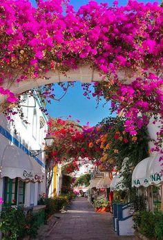 It's a beautiful world Bougainvillea in Puerto de Mogán, Gran Canaria / Spain Tenerife, Places To Travel, Places To See, Wonderful Places, Beautiful Places, Places Around The World, Around The Worlds, Spain And Portugal, Canario