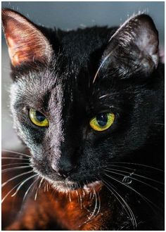 Spiritual Meaning of Black Cat Crossing Your Path - Insight state Black Cat Meaning, Mean Cat, Spiritual Meaning, Lost Soul, Cat Breeds, Paths, Meant To Be, Spirituality, Pure Products