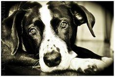 La diferencia entre acudir a un adiestrador y a un etólogo.   ADIESTRADOR.  Si queremos que nuestro perro camine junto sin tirar de la correa, obedezca órdenes sencillas como 'siéntate' o 'espera' y que no coma lo que se encuentre por el suelo, necesita adiestramiento. Y un adiestrador que nos enseñe a nosotros a trabajar con el perro y trabaje con refuerzos positivos.  ETÓLOGO  Si nuestro perro tiene problemas de agresividad, tiene ansiedad por separación, miedos, fobias…