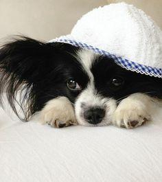 Popeye`s,Bade,Set,Hunde Bademantel, Hunde Badehandtuch, Bade Set, Frottée, Vichy-Karo, Berlin, handmade