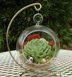 SALE Budget-Priced California Quail Colorful Succulent Terrarium Garden Hanging DIY Kit with Gift Box and FREE Stand via Etsy