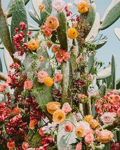 Roses ranunculus Icelandic poppies bougainvillea off cactus! Roses ranunculus Icelandic poppies bougainvillea off cactus! Wild Flowers, Beautiful Flowers, Desert Flowers, Exotic Flowers, Fresh Flowers, Colorful Flowers, Purple Flowers, Spring Flowers, Beautiful Dresses
