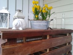 Narsissit kukkinut pääsiäisestä saakka! :)