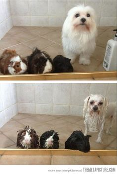 Shower: before and after