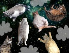 Fat Cats in Space: The Flip Flop Collection by Melissa Sixma, via Behance