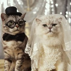 """""""Wedding magazines depress me."""" 