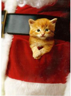 Santa's Helper Kitty has ringside seat