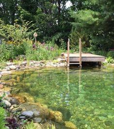 Swimming Pool Prices, Natural Swimming Ponds, Natural Pond, Swimming Pools Backyard, Ponds Backyard, Swimming Pool Designs, Garden Pool, Lap Pools, Indoor Pools