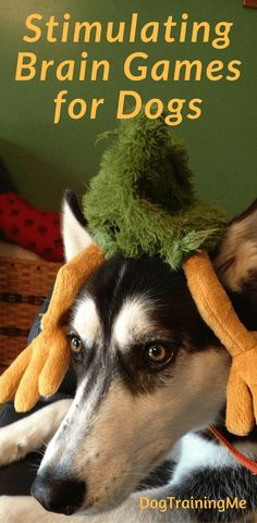 Stimulating Brain Games for dogs