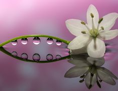 水滴と光で咲く奇跡の花。春の一瞬を切り取るマクロ撮影術 Water Drop Photography, Water Art, Flower Images, What A Wonderful World, Water Drops, Photo Art, Jewels, Cool Stuff, Flowers